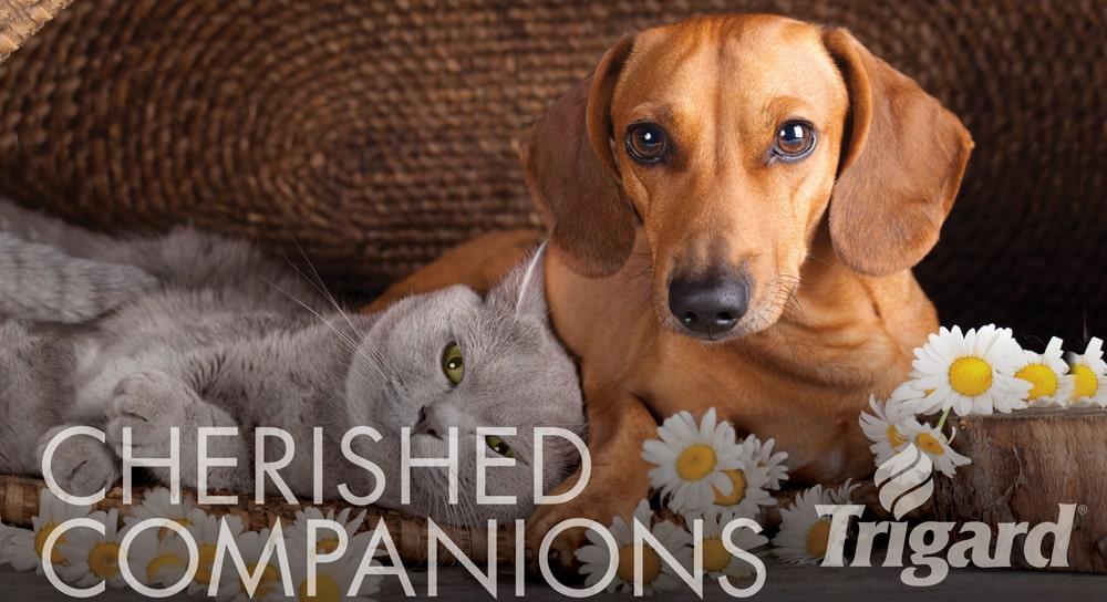 Pet Memorials Cremation