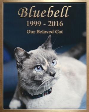 Bluebell Cat Pet Memoralization