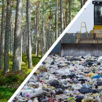 Forest To Landfill